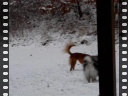 puppies in snow.avi