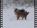 puppies in snow2-1300kbs.avi